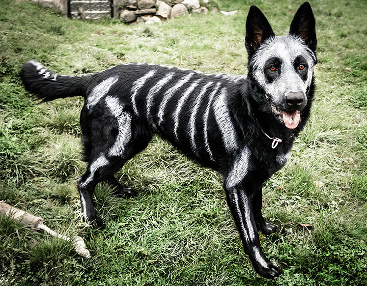Dog Paint Halloween