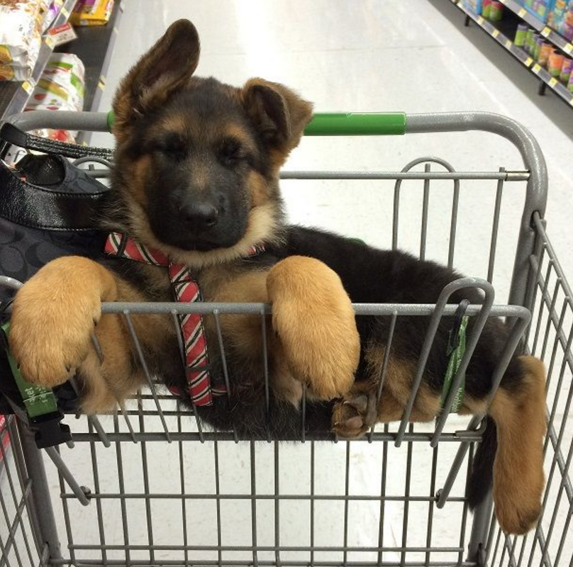 shopping pup.png