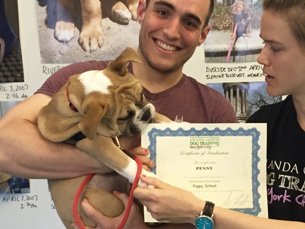 Puppy Kindergarten - Puppy Kindergarten is the essential socialization and manners class for puppies from 10-weeks to 4.5-months of age. Join us to find out why our puppy classes are the best in the business. Learn More.