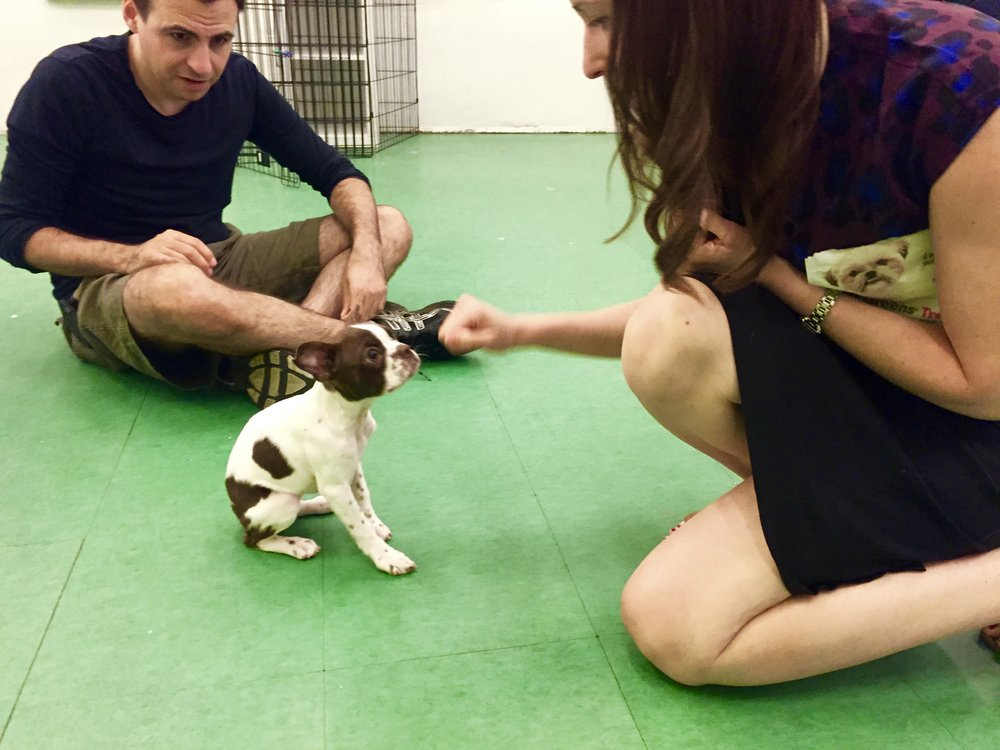 Private Puppy Training - Private, in-home coaching is a great way to set you and your puppy up for success from the start. Programs are entirely customized to your needs. Learn More.