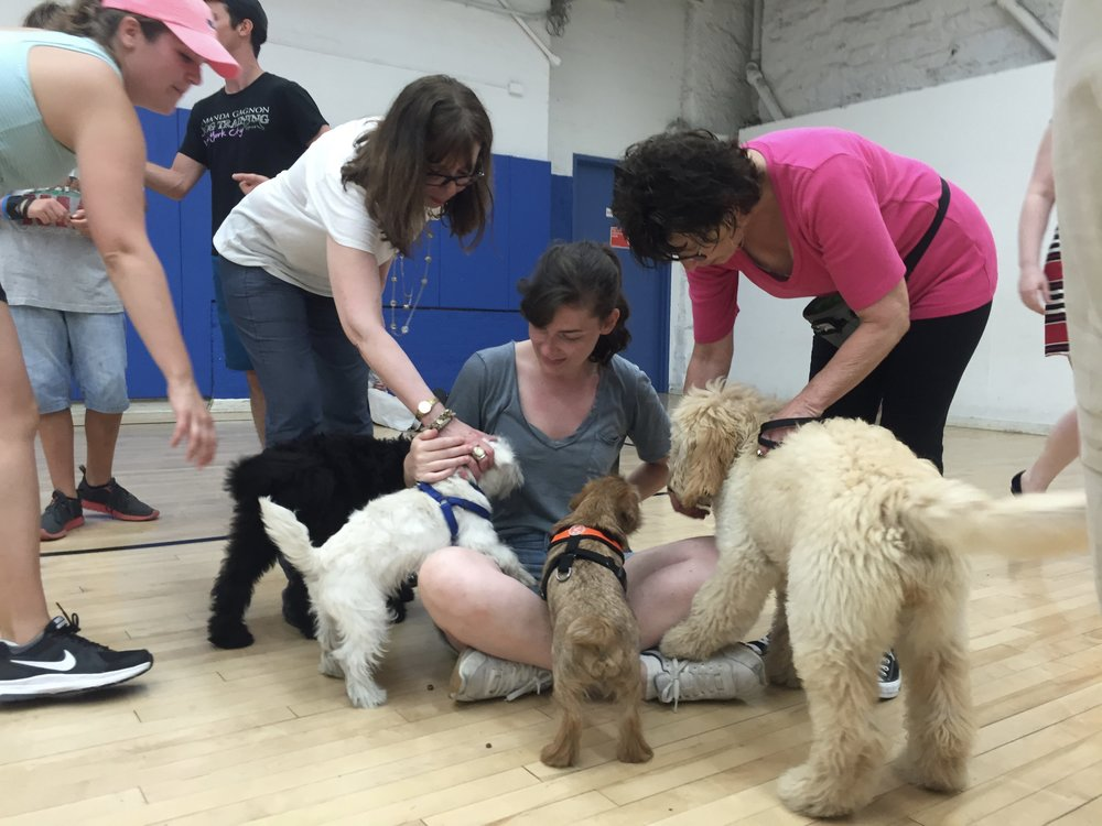 LOCATIONS & SCHEDULE: - Amanda Gagnon Dog Training76 West 85th Street, Unit A, off Columbus AveMondays & Tuesdays at 6pm. Thursdays at 6:30pm. Saturdays at 10am.Dog Days of New York2581 Broadway at West 97th StreetSundays at 10amPaws Country Club301 W 113th Street at Frederick Douglas BlvdSundays at 11:30am