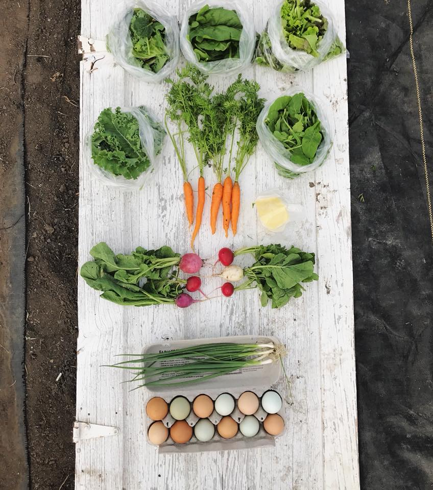 Week 1: Mixed Salad Greens, Spinach, Leaf Lettuce, Kale, Carrots, Baby Arugula, Mozzarella, Radishes, Green Onions, Eggs