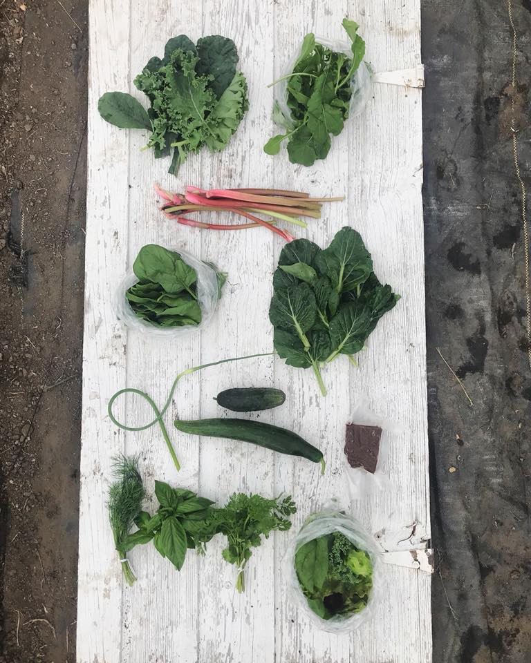 Week 4: Kale, Arugula, Rhubarb, Spinach, Tatsoi, Garlic Scape, Pickling Cucumber, Slicing Cucumber, Goat Milk Fudge, Fresh Herbs, Mixed Salad Greens
