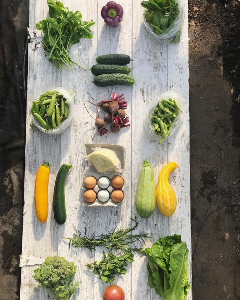 Week 7: Arugula, Bell Pepper, Mixed Salad Greens, Cucumbers, Shell Peas, Baby Beets, Sugar Snap Peas, Garlic and Chives Jack Cheese, Zucchini, Eggs, Summer Squash, Broccoli, Fresh Herbs, Romaine Lettuce, Heirloom Tomato