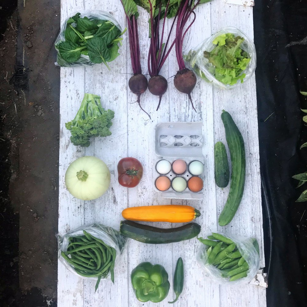Week 8: Tatsoi, Beets, Mixed Salad Greens, Broccoli, Summer Squash, Heirloom Tomato, Eggs, Cucumbers, Zucchini, Green Beans, Shell Peas, Bell Pepper, Jalapeno (Not Pictured: Green Onions, Turnips, Fresh Herbs)
