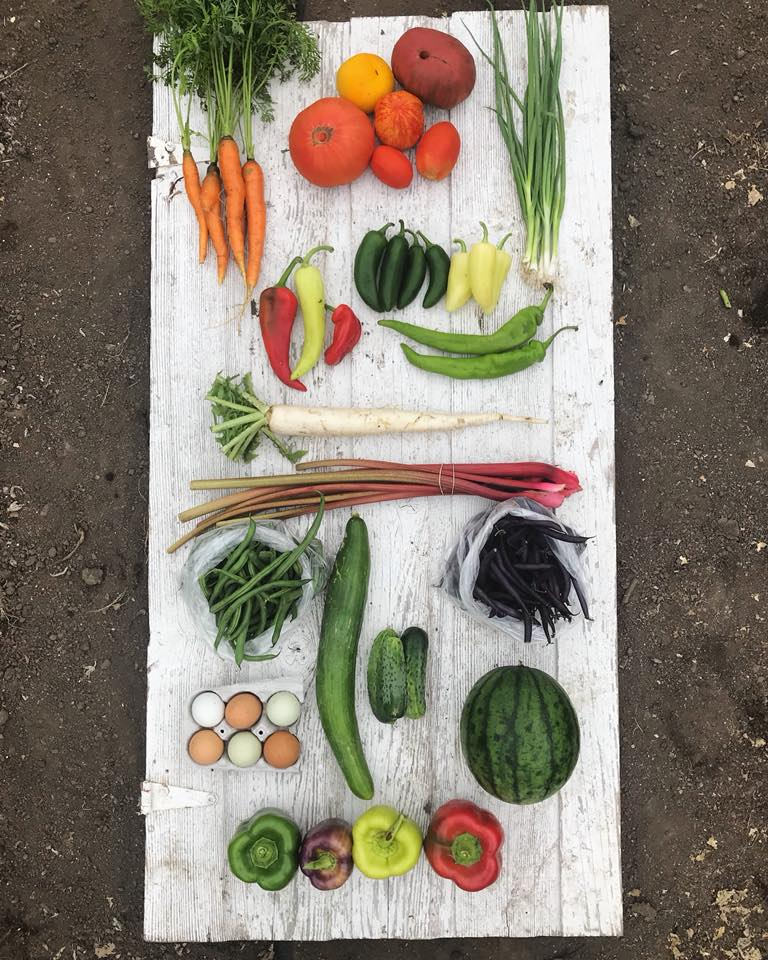 Week 13: Carrots, Tomatoes, Green Onions, Sweet Peppers, Hot Peppers, Daikon Radish, Rhubarb, Green Beans, Cucumbers, Purple Beans, Eggs, Watermelon, Bell Peppers