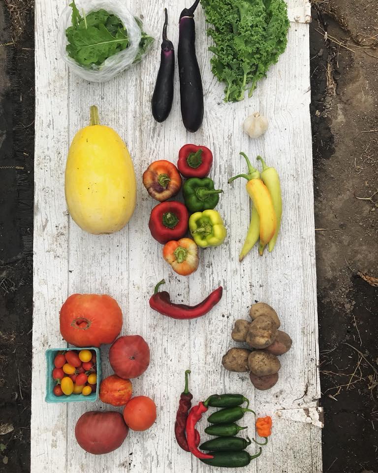 Week 15: Arugula, Eggplant, Kale, Spaghetti Squash, Bell Peppers, Sweet Peppers, Tomatoes, Potatoes, Hot Peppers