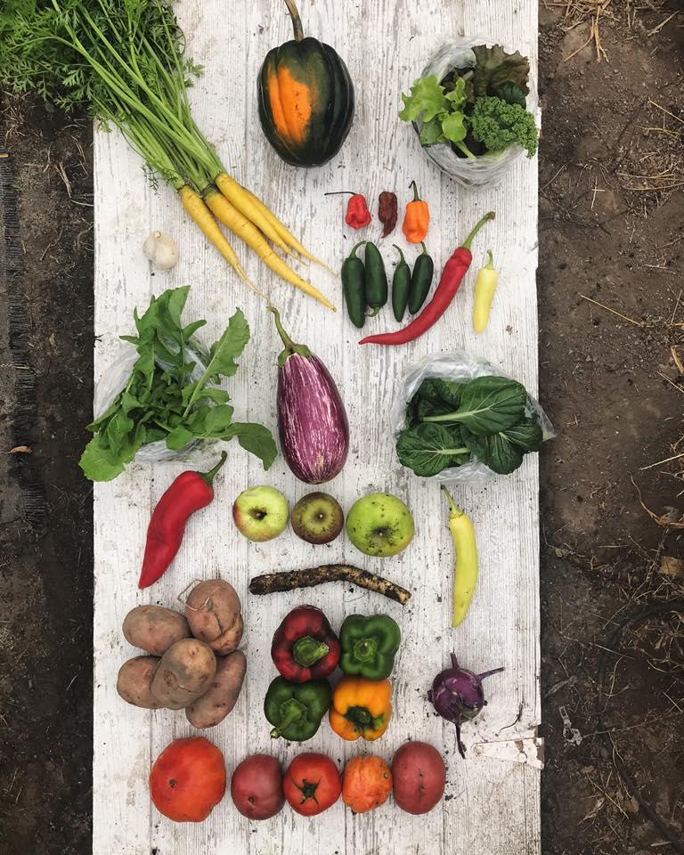 Week 17: Carrots, Acorn Squash, Mixed Salad Greens, Garlic, Hot Peppers, Arugula, Eggplant, Tatsoi, Sweet Peppers, Apples, Horseradish, Potatoes, Bell Peppers, Kohlrabi, Tomatoes