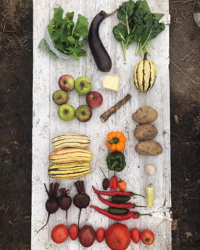 Week 18: Arugula, Eggplant, Tatsoi, Apples, Mozzarella, Jester Squash, Apples, Horseradish, Delicata Squash. Bell Peppers, Potatoes, Garlic, Beets, Hot Peppers, Tomatoes