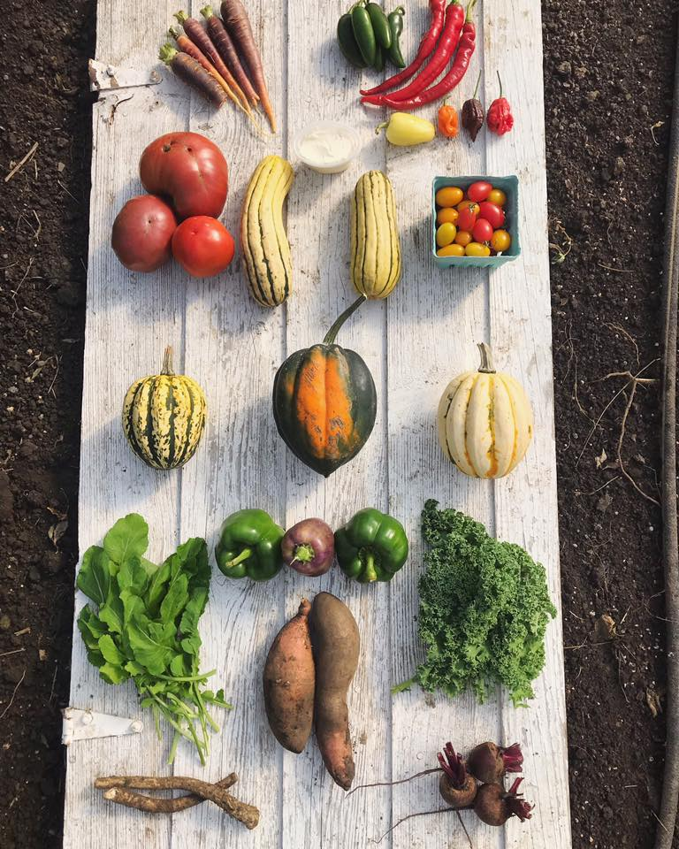 Week 19: Carrots, Hot Peppers, Tomatoes, Delicata Squash, Fromage Blanc Cheese, Grape Tomatoes, Jester Squash, Acorn Squash, Arugula, Bell Peppers, Kale, Sweet Potatoes, Horseradish, Beets