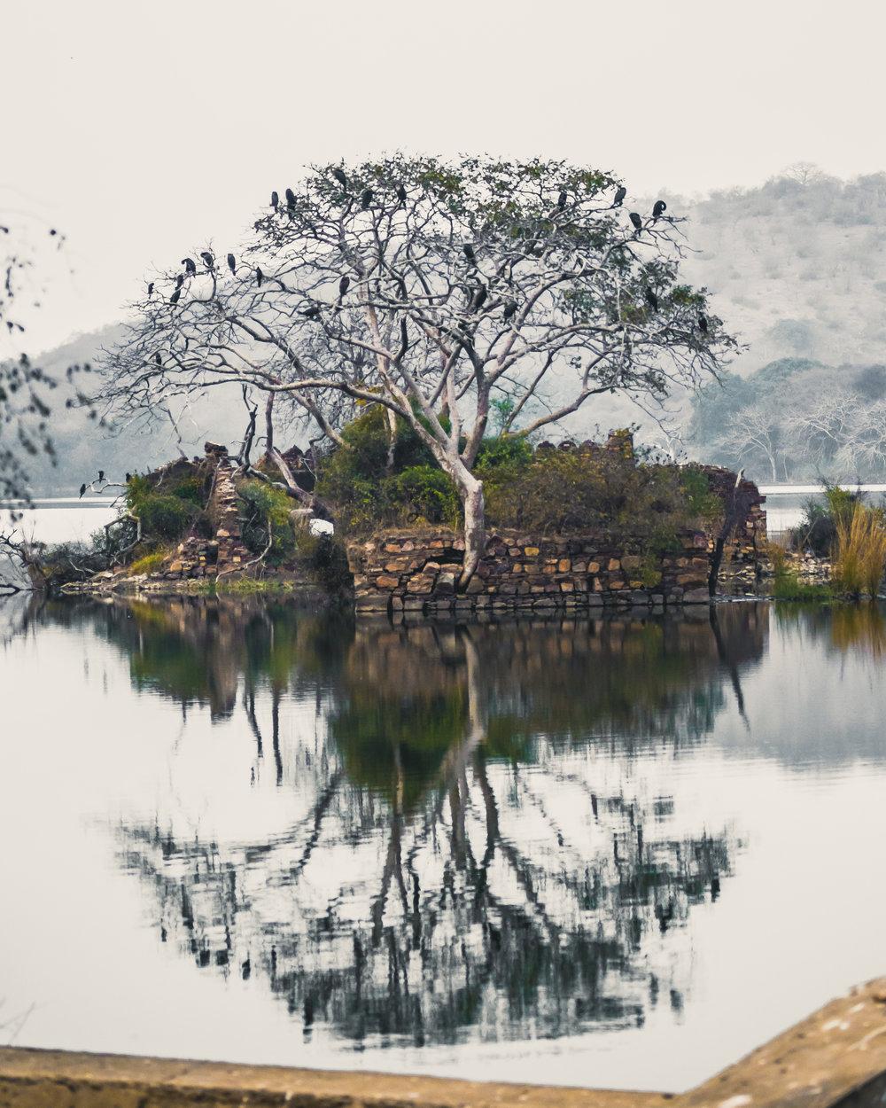 India 2013 - Lenssen-5793.jpg