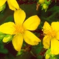 botanical_medicine