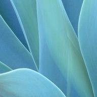 agave_botanical_medicine.jpg