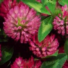 red_cl_botanicals.JPG
