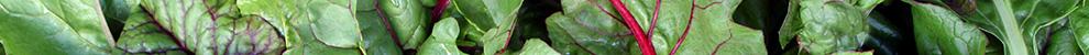 Photo of rainbow swiss chard – Naturopathic Methods, Nutrition
