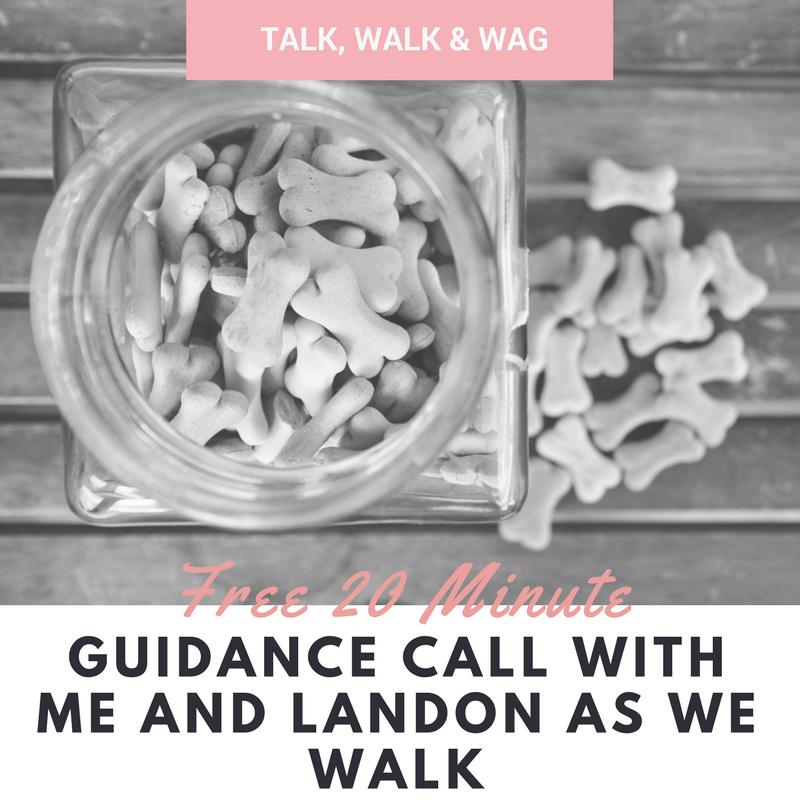 Talk, Walk Wag