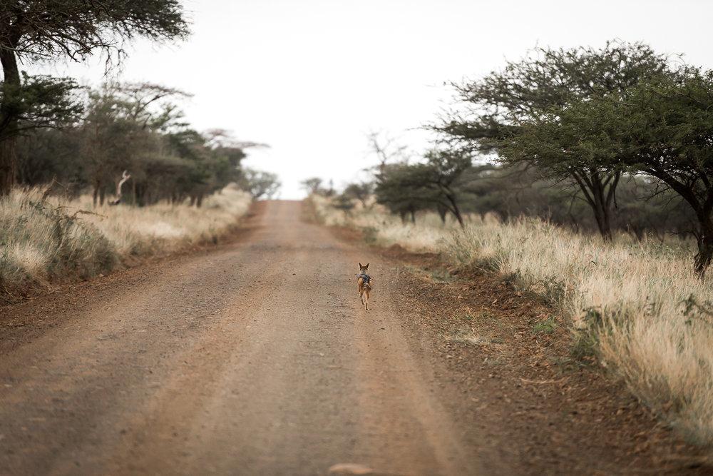 SouthAfrica-126_LR.jpg