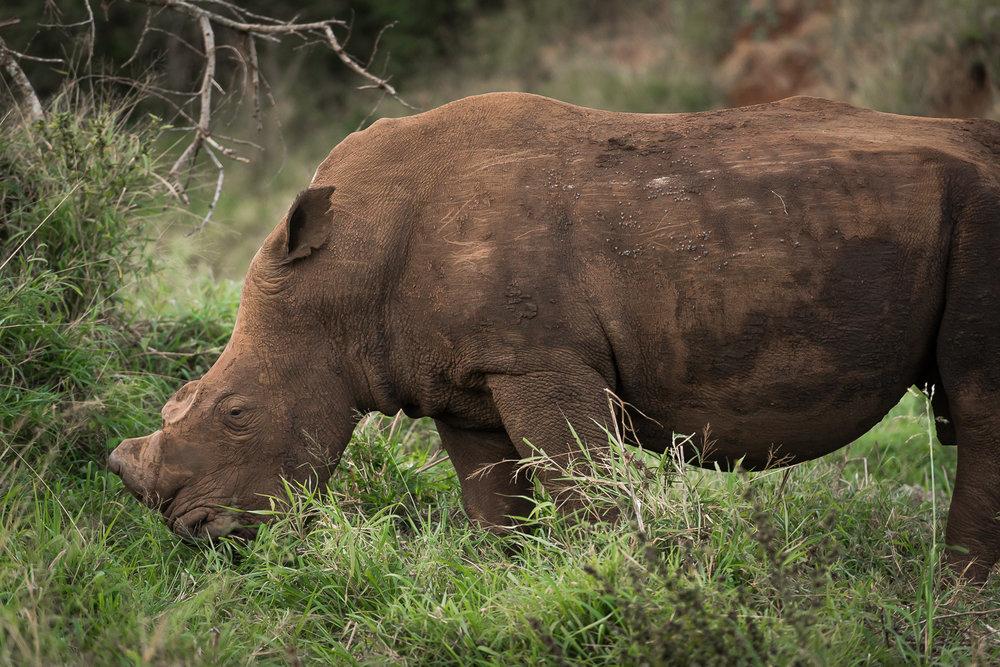 SouthAfrica-187_LR.jpg