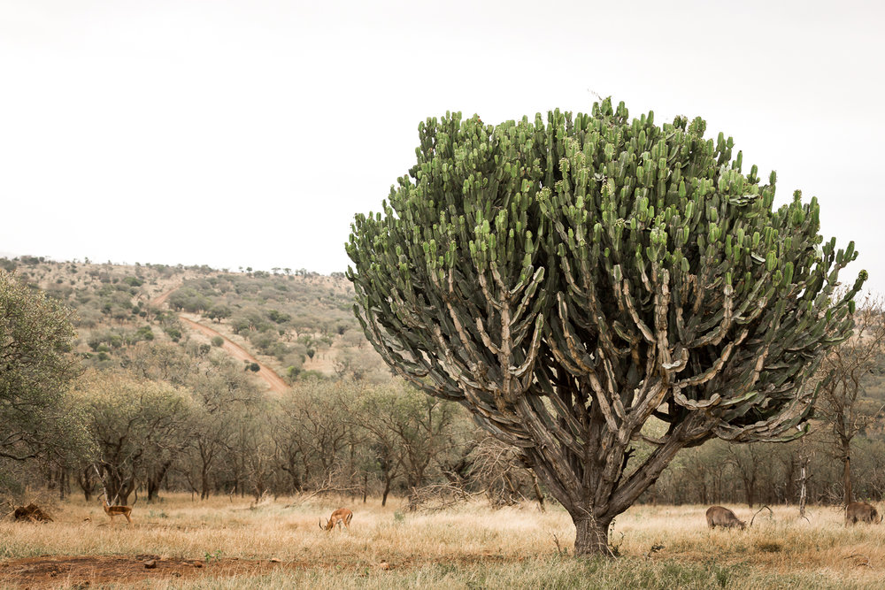 SouthAfrica-203_LR.jpg
