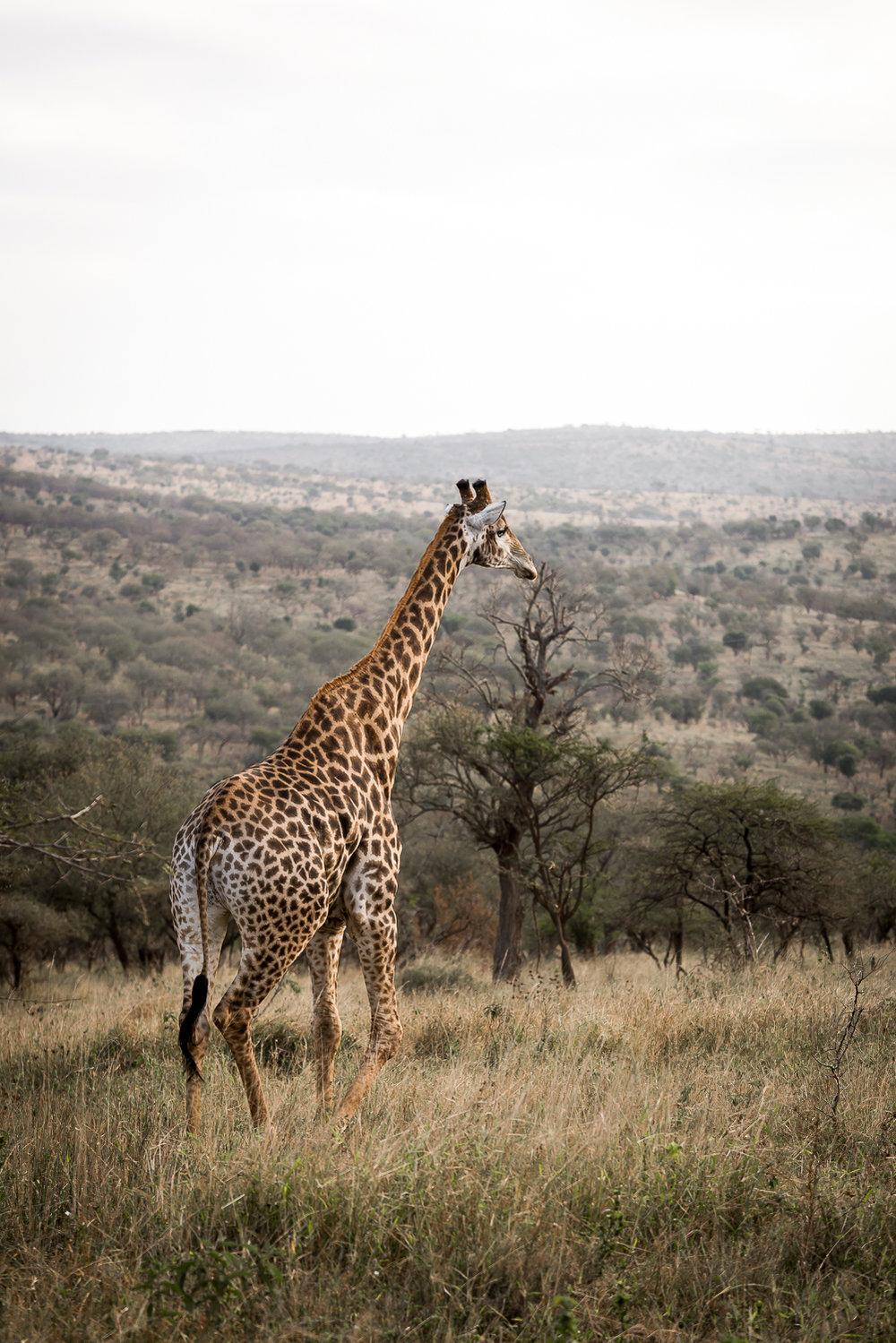 SouthAfrica-218_LR.jpg
