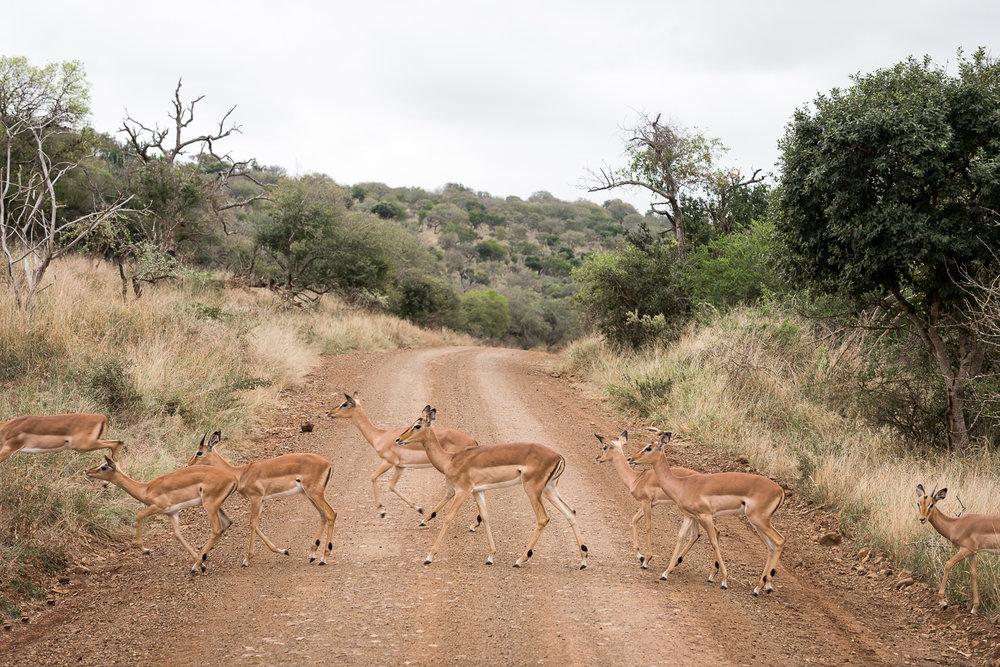 SouthAfrica-335-2089_LR.jpg