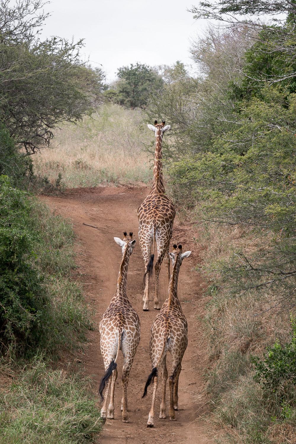 SouthAfrica-295_LR.jpg