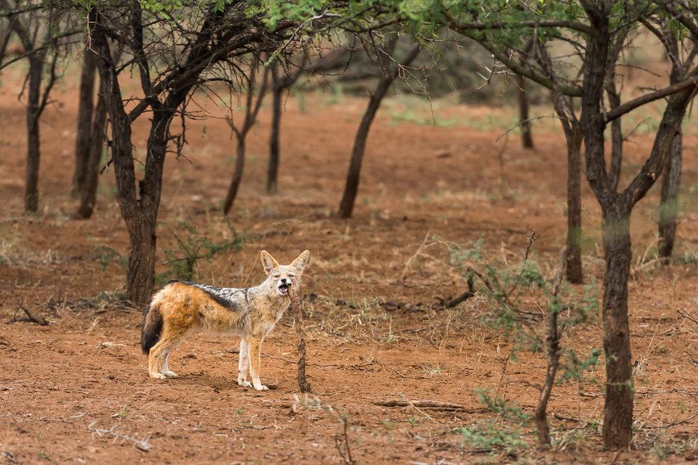 SouthAfrica-793_LR.jpg