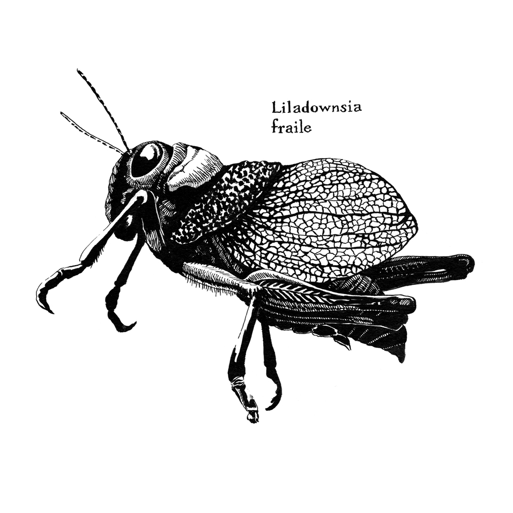 Lila Downs' Friar Grasshopper
