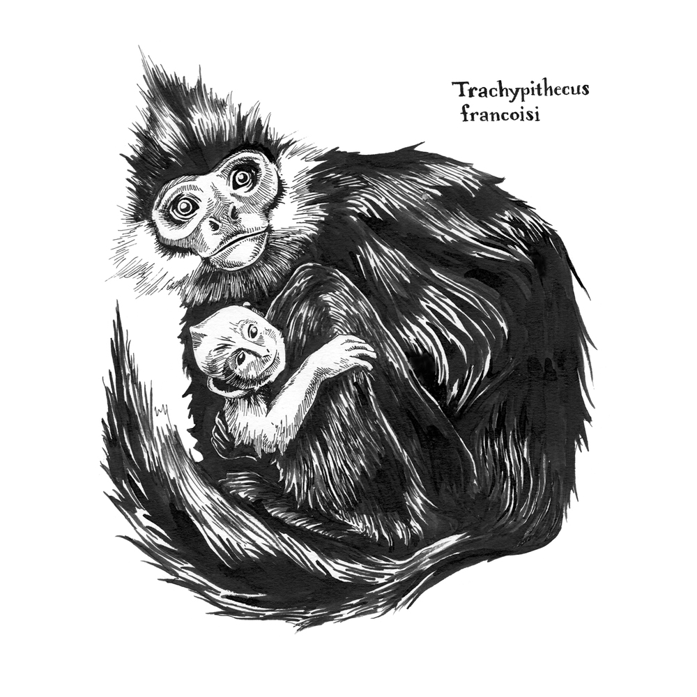 Trachypithecus-francoisi_Langur.jpg