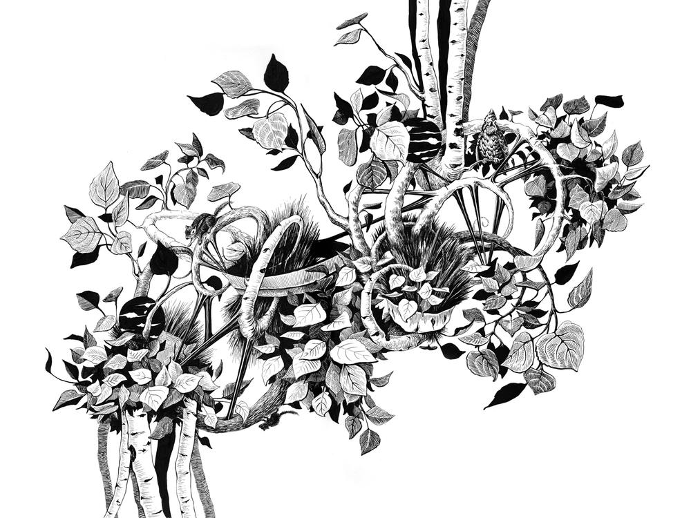 Botanica_Previte_Web.jpg