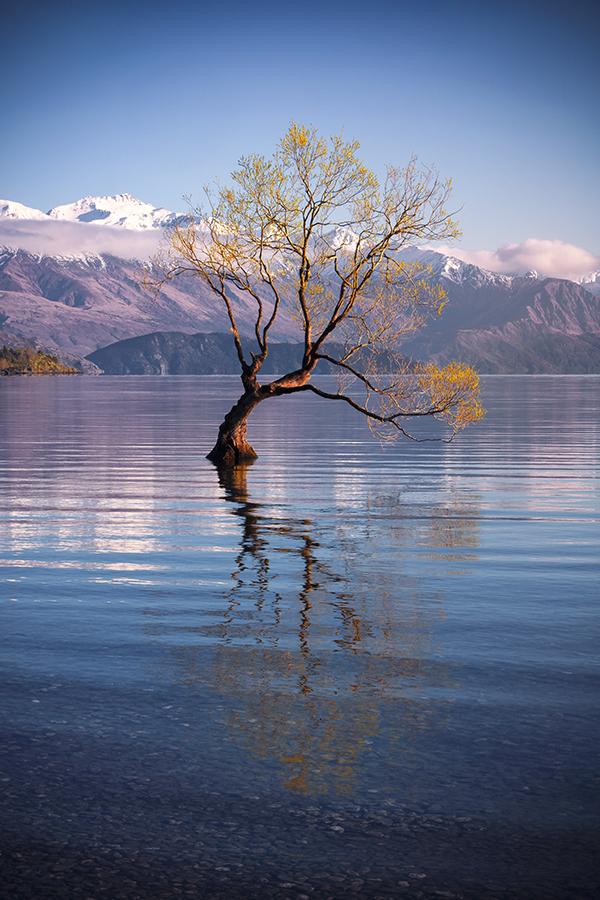 DPW NZ_5.jpg