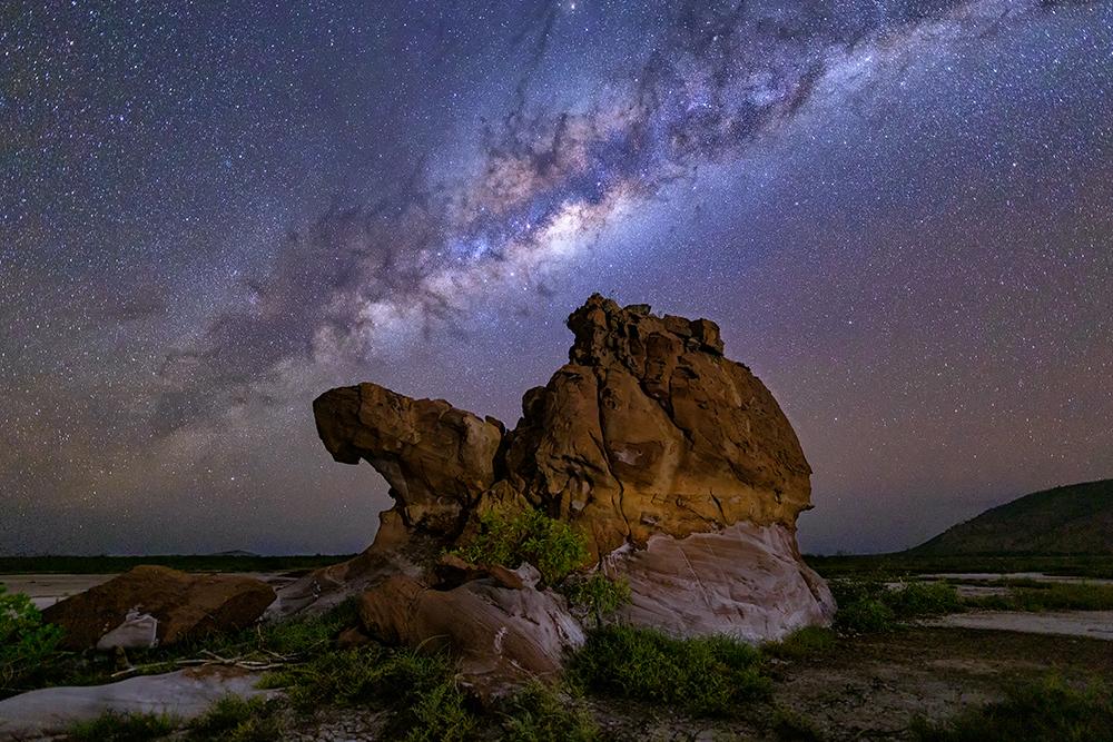Camel Dream.jpg