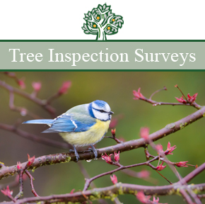 Tree Inspection Surveys