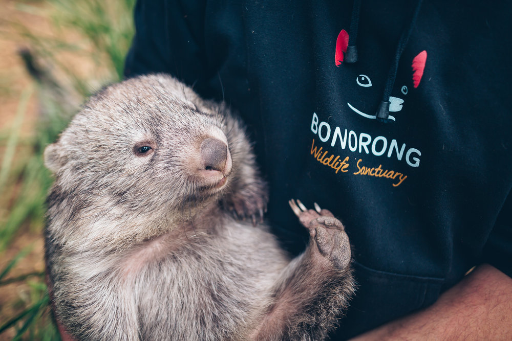 Owner Greg, cuddling an orphaned Wombat