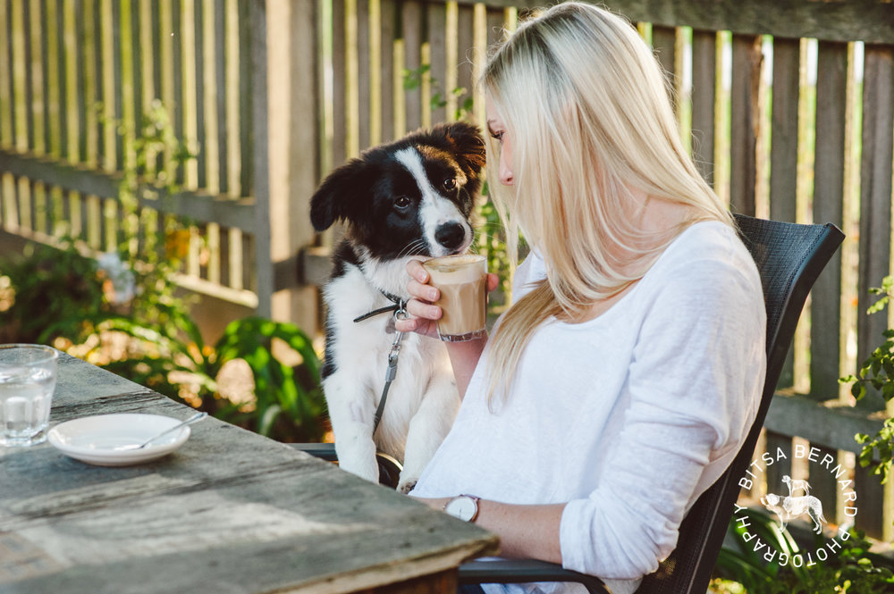 Adelaide Pet Friendly Cafes and Bars