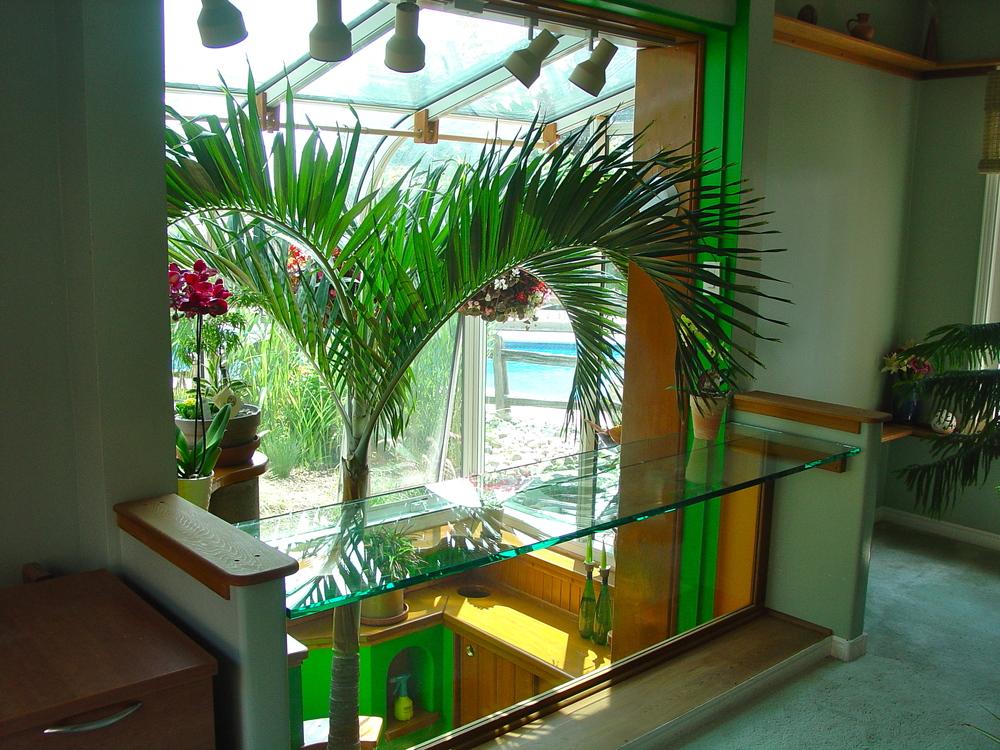 Palm Tree Decor, Viewing Room