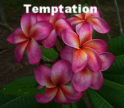 Darryl Exelby - tempation.png
