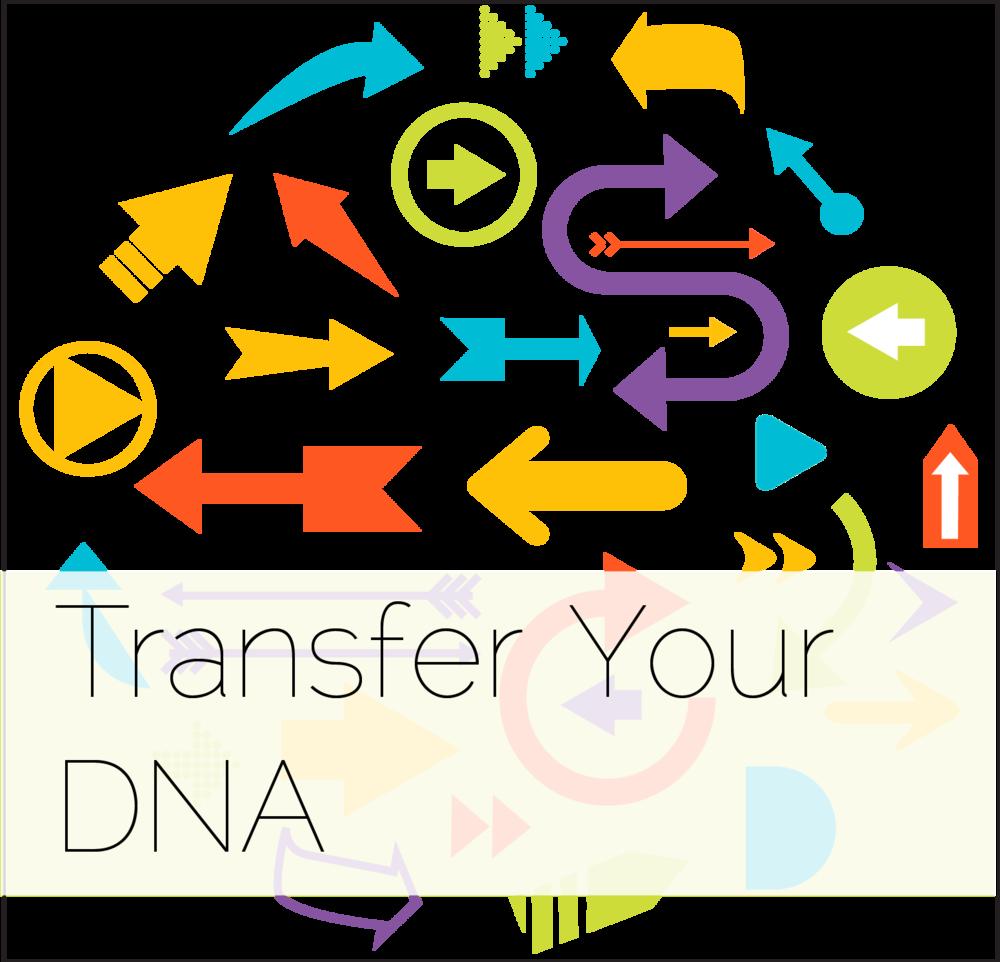 TransferDNA.png