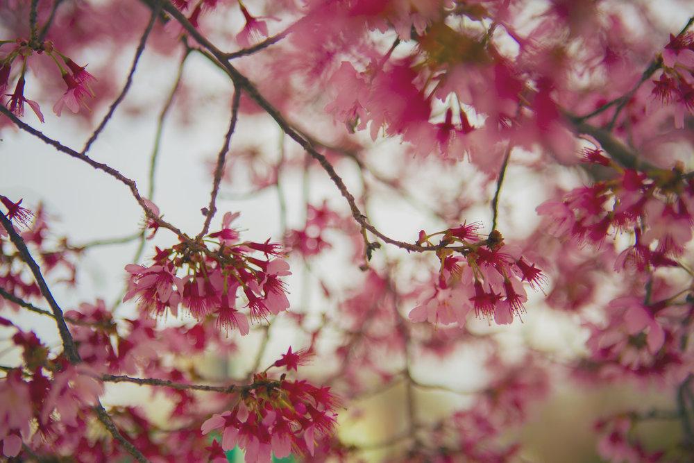 blooms_001 (3).jpg