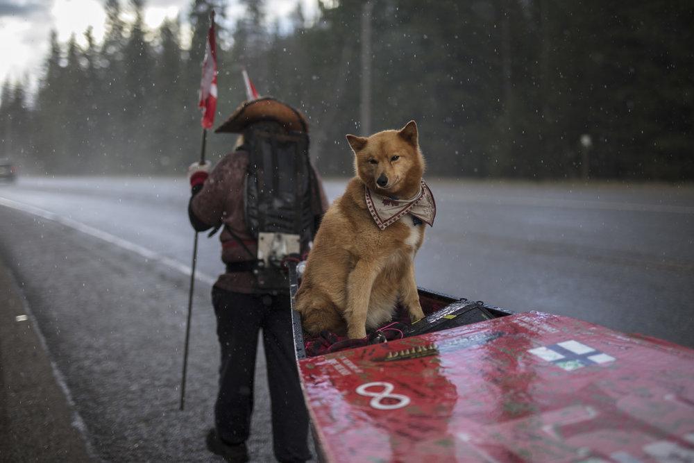 Mike Ranta endures a rainy day on the Yellow Head Highway of British Columbia. 20170426.  Photo/David Jackson