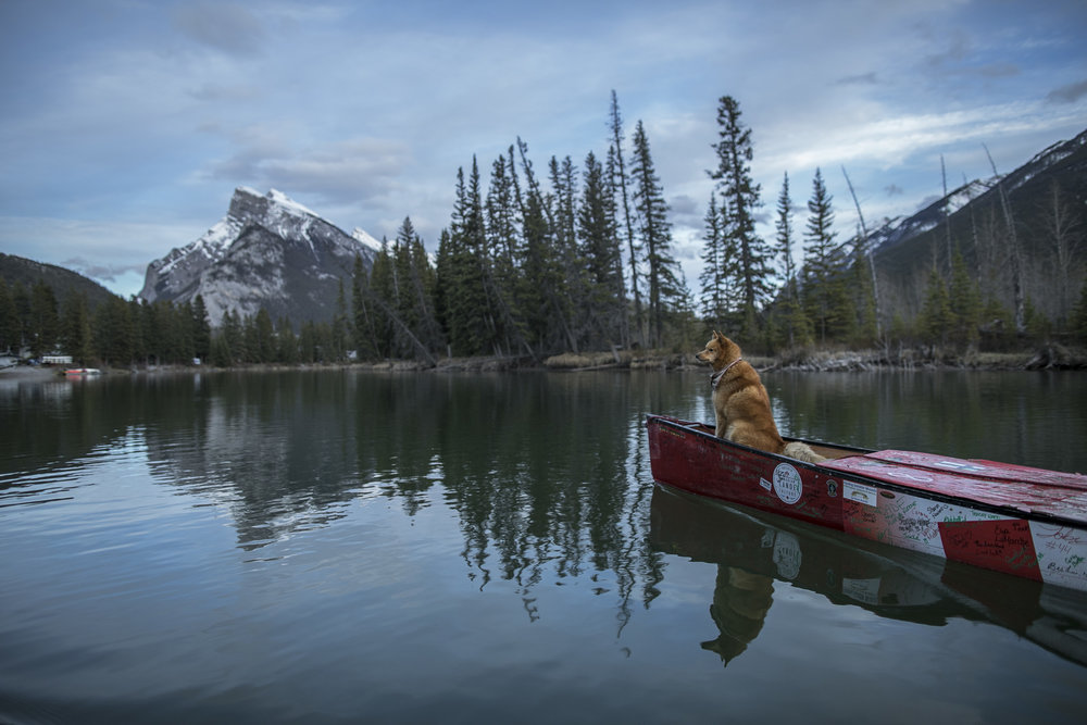Getting onto the Bow River, Ranta finds idyllic mountain weather as he paddles from lake louise to banff, Alberta.  20170519.  Photo/David Jackson