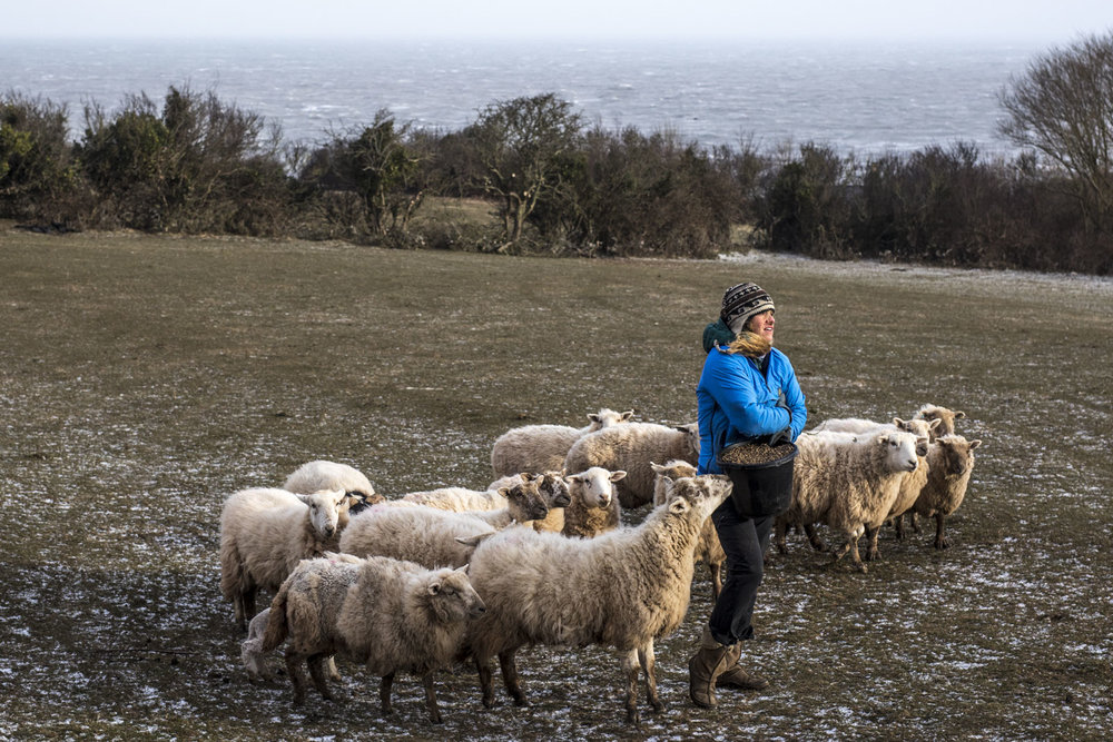 Branywen Hughes, Avion Hughes, and Patsy Hughes work to feed and house new born lambs during a harsh polar vortex felt across the entire country, Anglesey, Wales, United Kingdom. Photo/ David Jackson