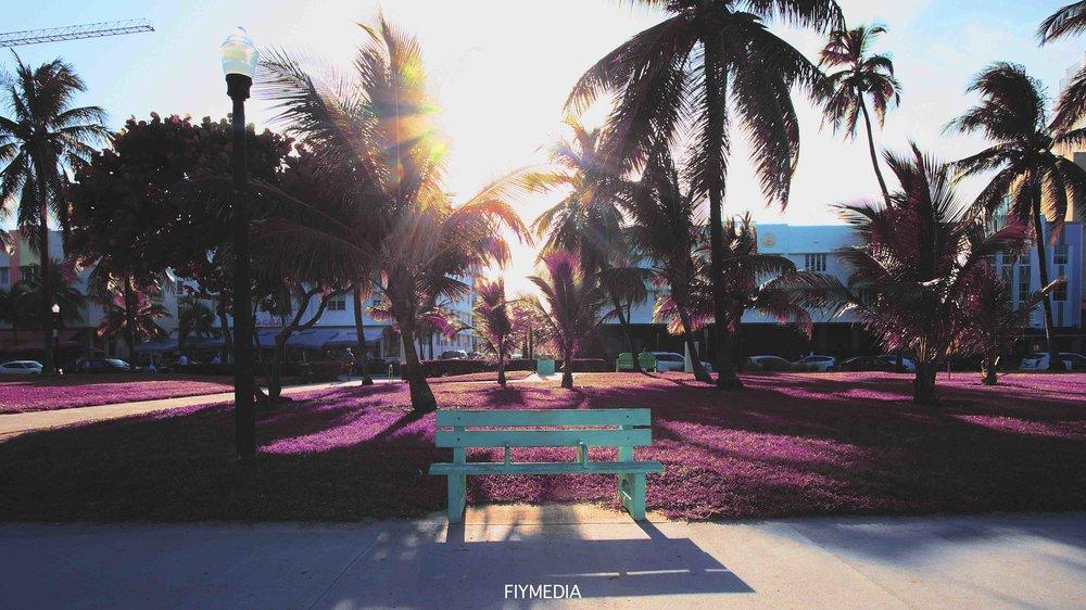trippy palm tree