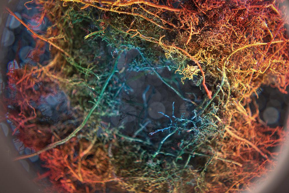 6. Rhizome Nebula (detail 1).jpg