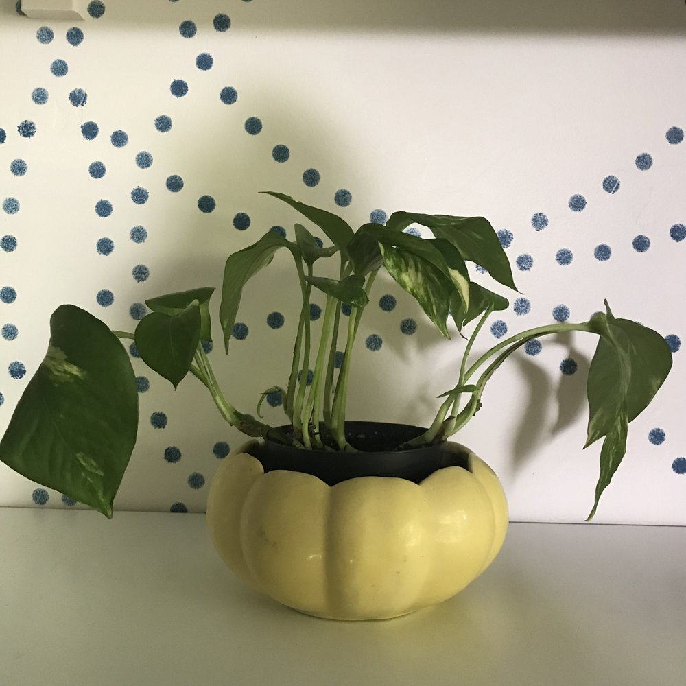 Mid century planter thrift find $5