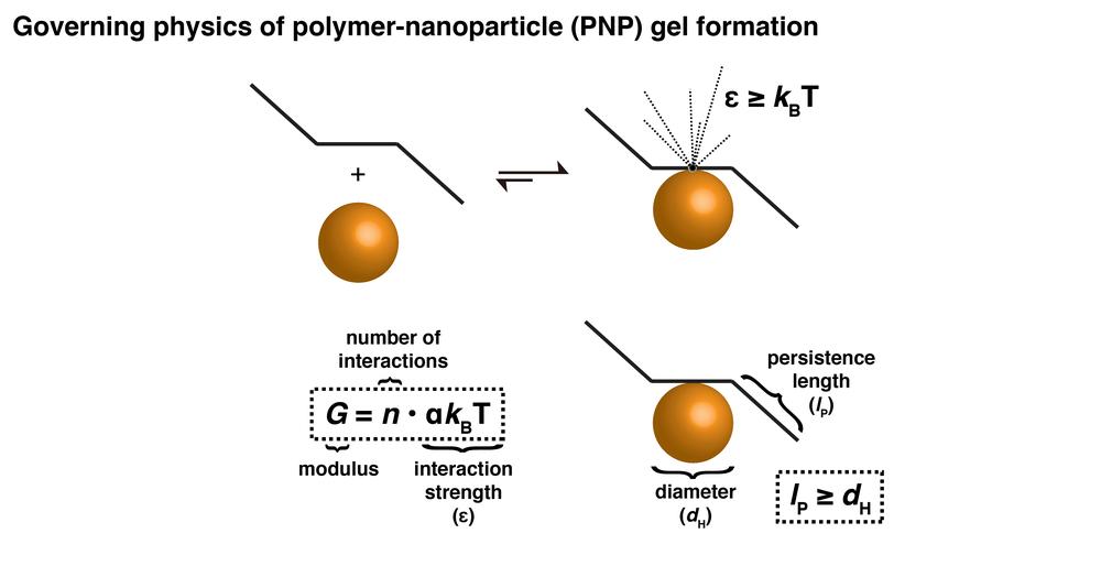 PNP_Physics-01.png