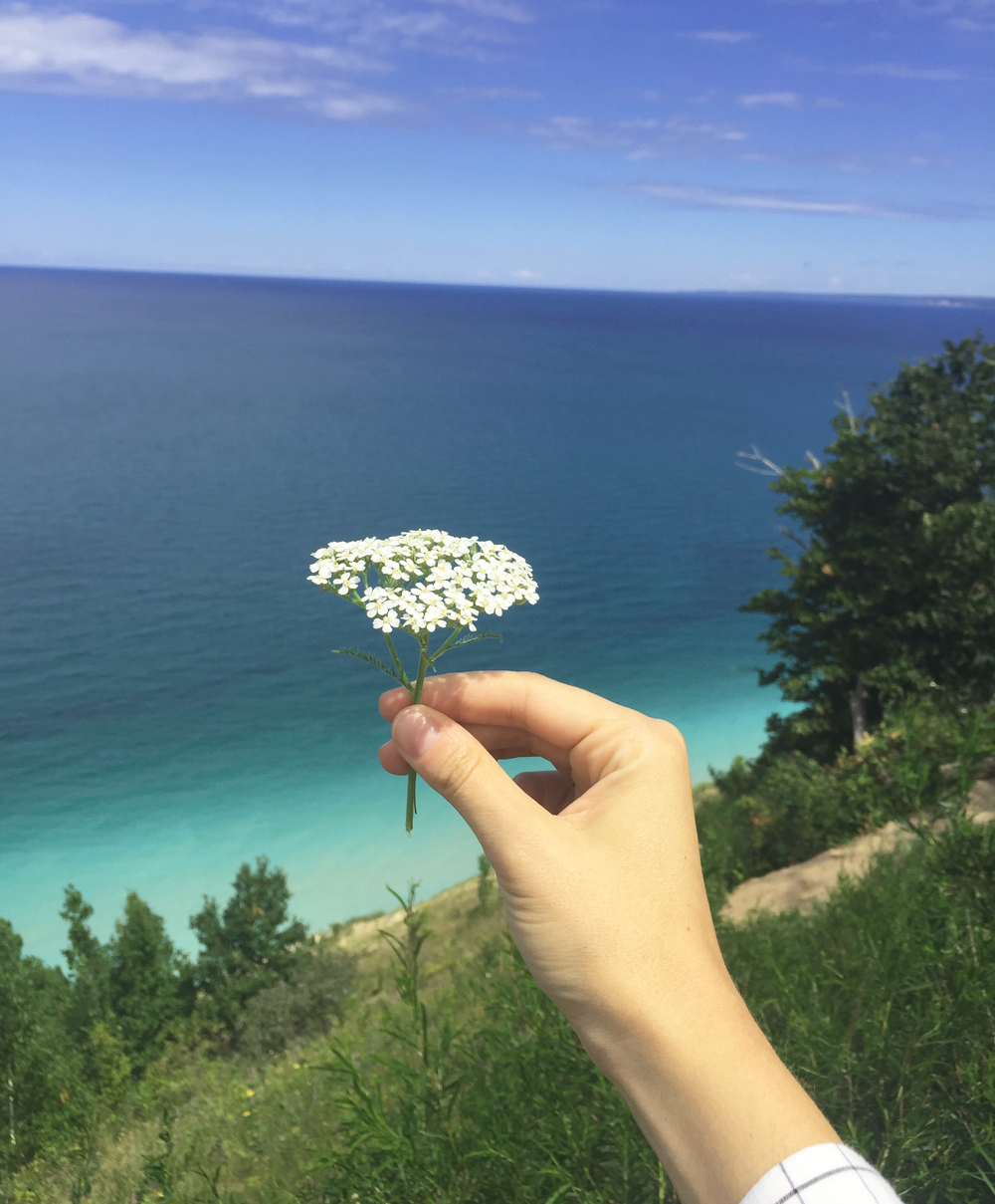 So many wildflowers that dotted Lake Michigan
