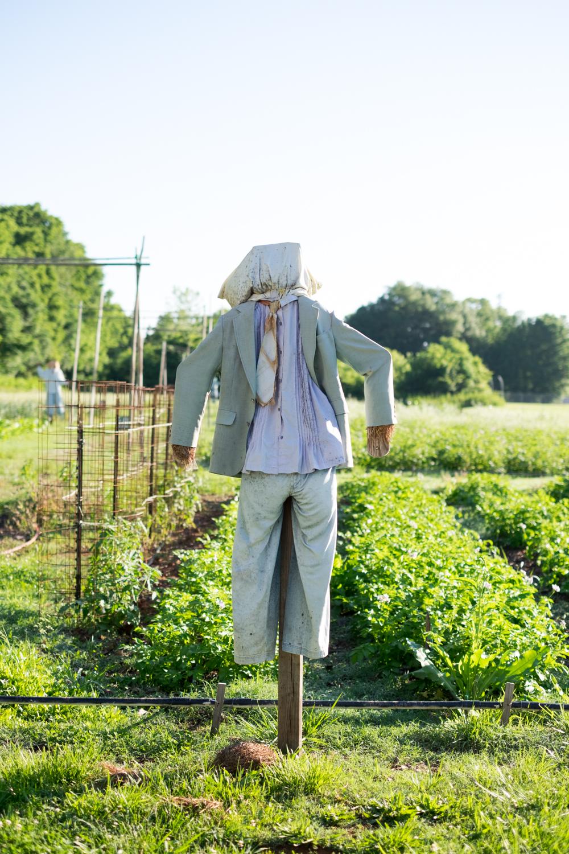 friendship gardens-5.jpg