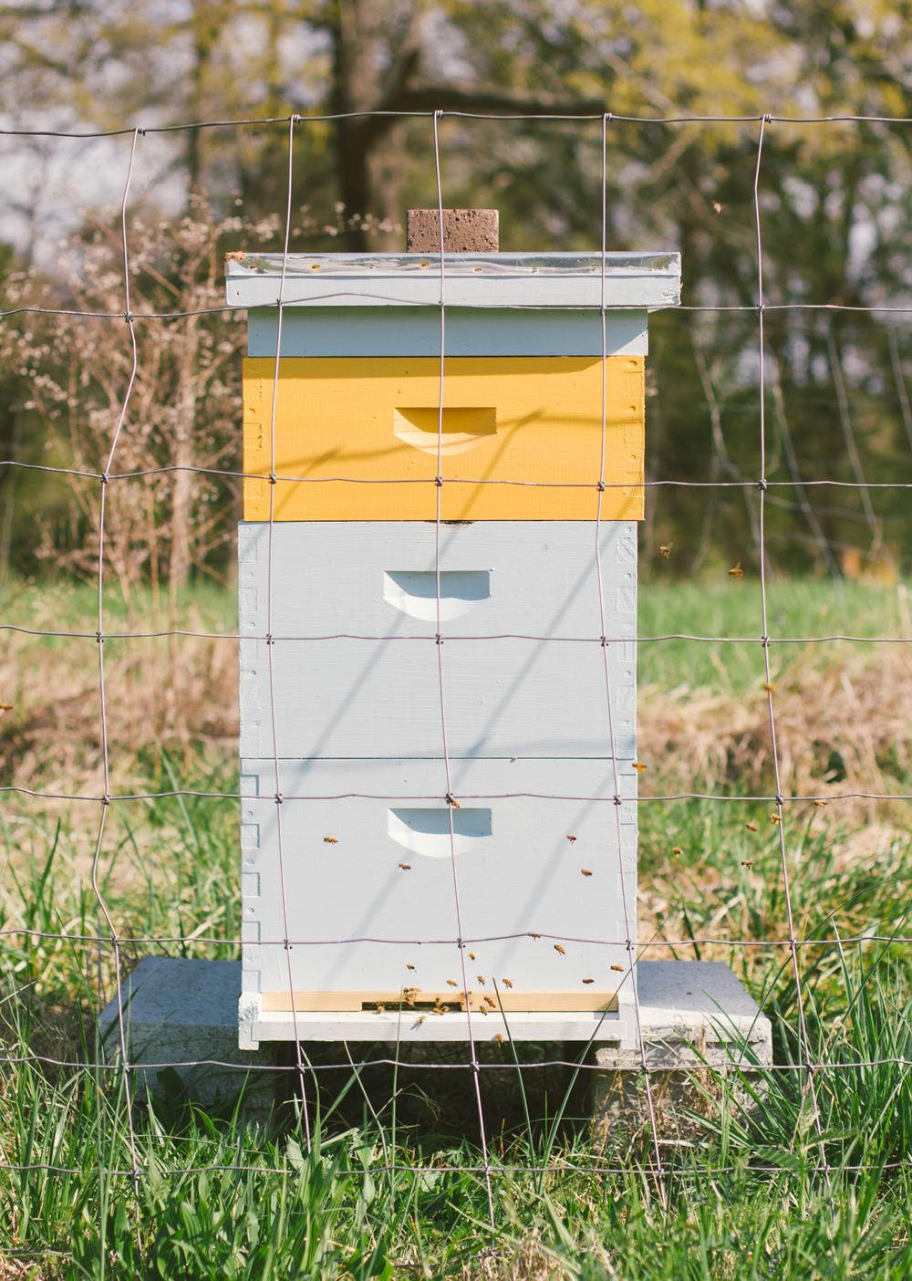 Lomax Incubator Farm-3.jpg
