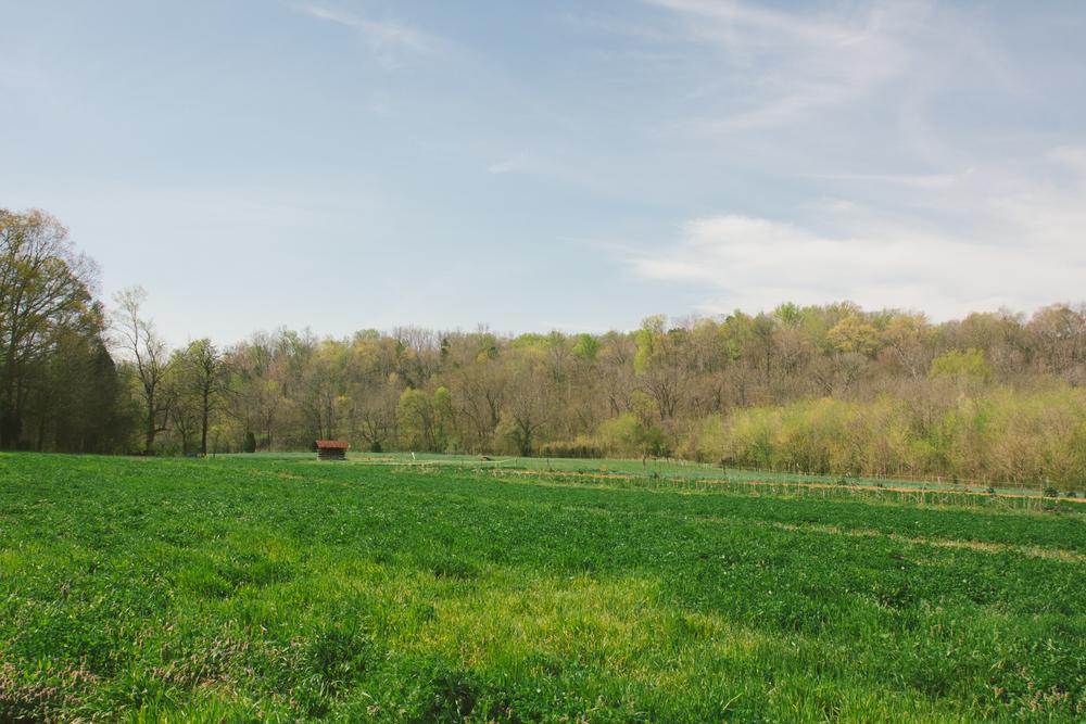 Lomax Incubator Farm-19.jpg